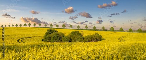 Foto op Canvas Honing rural landscape ,panorama of spring field