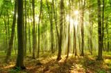 Naturnaher Buchenwald, Sonnenstrahlen brechen durch Morgennebel - 189999125