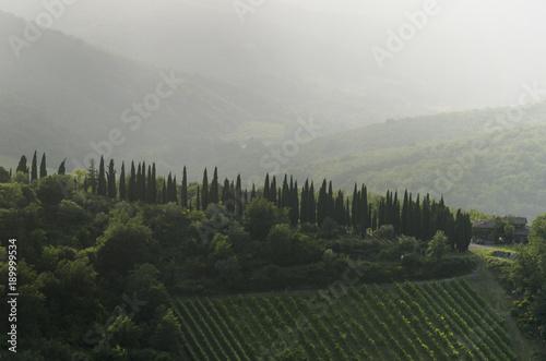 Staande foto Toscane TUSCANY