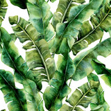 Watercolor pattern with magnificent banana palm leaves. Hand painted exotic greenery branch. Tropic plant isolated on white background. Botanical illustration. For design, print or background. - 189999965