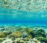 Tranquil underwater - 190007759
