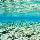 Tranquil underwater - 190007767