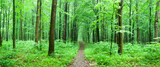 green forest - 190008714