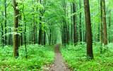 green forest - 190008732