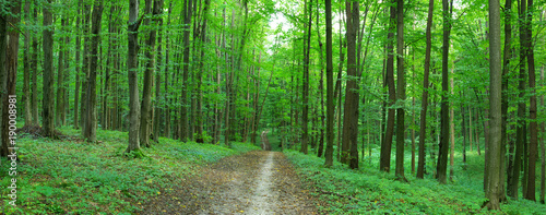 green forest - 190008981