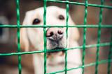 Dog face behind bars, veterinary clinic, no people