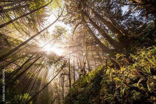 Staande foto Ochtendgloren Forest Sunrise