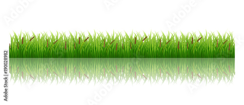 Keuken foto achterwand Paardebloem Grass isolated on white green meadow nature vector image