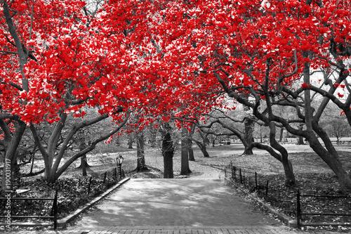 baldachim-czerwoni-drzewa-w-surrealistycznej-czarny-i-bialy-krajobrazowej-scenie-w-central-park-miasto-nowy-jork