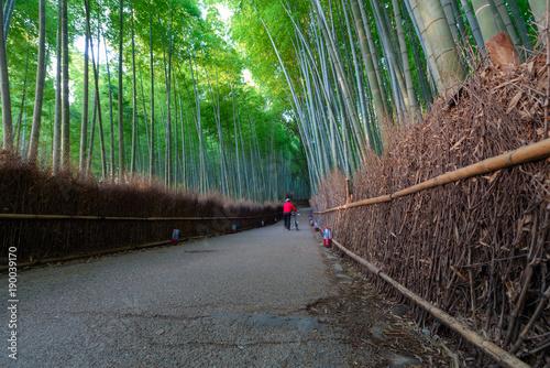 Sagano bamboo grove at Arashiyama in Kyoto Japan. © t0pkul3