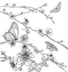 Butterflies Cherry Peach Blossom Flowers