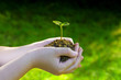 Young plant or seedling in the hands of a child. Plant or small tree ready for planting in the garden. Seedling growing in the ground in hands. Plant in side light and with green background.
