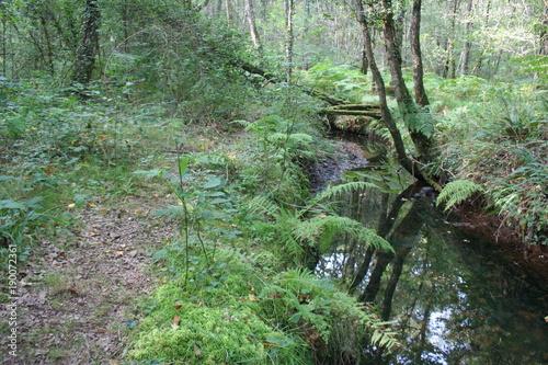 Fotobehang Olijf Forêt enchanteuse Brocéliande