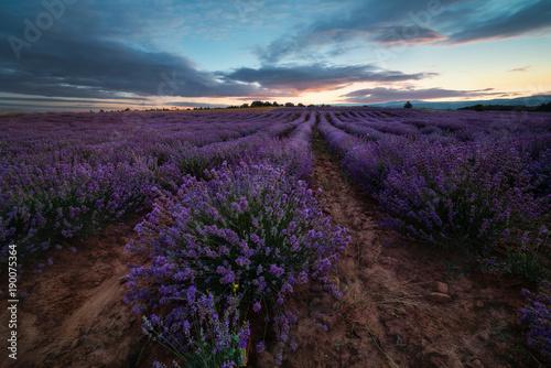Papiers peints Marron chocolat Lavender field at sunset