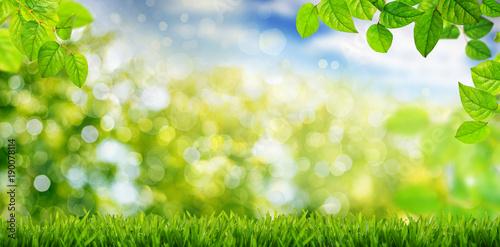 Krajobraz wiosną i latem, liście łąki