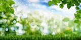 Naturlandschaft Wiese Himmel, Banner, Gras, Baum - 190078304
