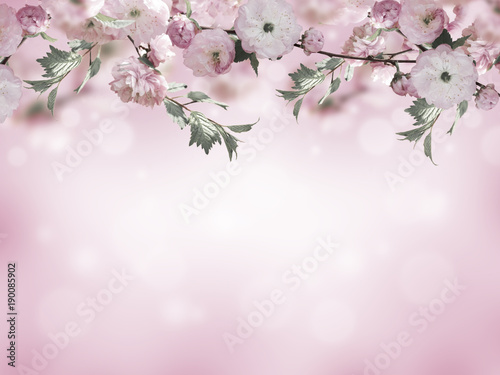 Fotobehang Vlinder Flowers background with amazing spring sakura with butterflies. Flowers of cherries.