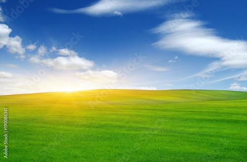 Foto Murales Green field and sun.