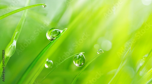 Leinwandbild Motiv Beautiful large drops of fresh morning dew macro in nature. Drops transparent water  on grass. Spring background with copy space.