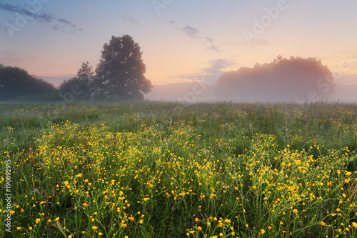 Foto op Aluminium Donkergrijs Wildflowers on meadow