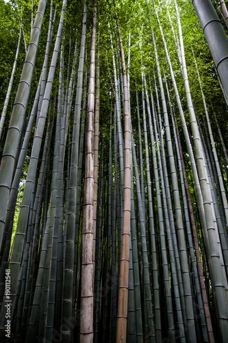 Keuken foto achterwand Kyoto Forêt de bambou à Kyoto