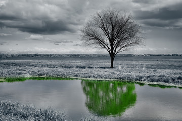 An unusual landscape. A lifeless tree without leaves is reflected in the water green and with leaves.
