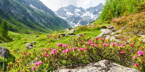 Panorama einer Berglandschaft mit Alpenrosen - 190127149