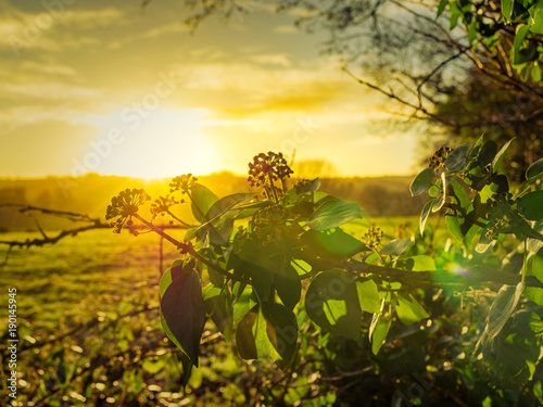 Foto op Aluminium Honing winter countryside morning,Northern Ireland