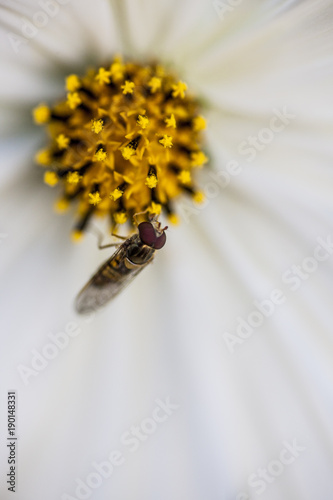 Aluminium Bee Insect with flower