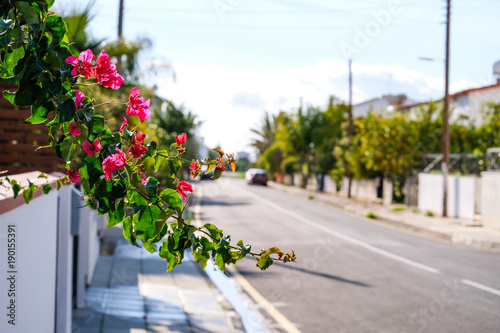 Foto op Canvas Cyprus Flowers on the streets of Larnaca