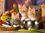 kitten and fresh fish - 190160116