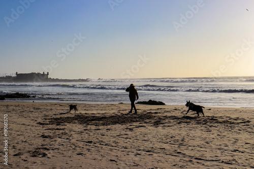 Fotobehang Strand Walking the dogs