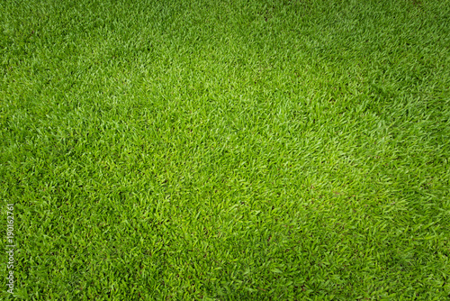 Green grass background and textured, Top view and detail of turf floor at soccer field - 190162761