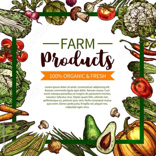 Vector sketch poster of farm organic vegetables