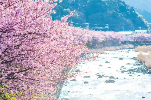 Papiers peints Rose clair / pale 河津桜