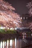 サギと桜(サギピント縦) - 190172541