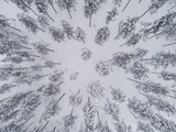 Aerial view of pine forest covered by snow seen directly above - 190194982