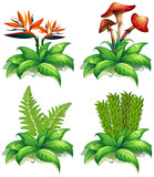 Four different types of plants on white background - 190216190