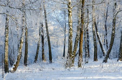 Fotobehang Berkenbos Picturesque winter birch grove in hoarfrost