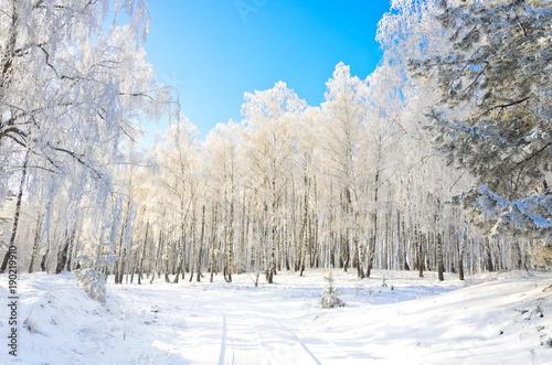 Papiers peints Bosquet de bouleaux Winter road in the grove