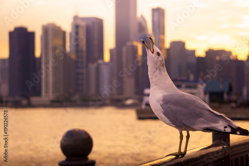 Papiers peints Chicago Seagull enjoying the sunset from navy pier looking towards downtown Chicago