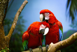 Macaw very much enjoying the grooming session - 190226905