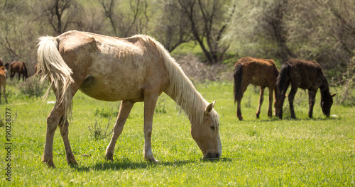 Aluminium Paarden Horses in the pasture in the spring