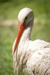 Portrait of a stork at the zoo