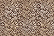 Leopard spotted fur texture