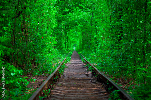 Poster Groene a railway in the spring forest