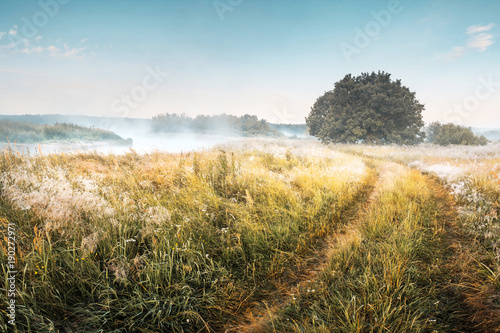 Fotobehang Zomer Summer landscape of morning meadow. Teal and orange toned landscape. Scenic river with mist and trees on shore. Way through meadow to river.