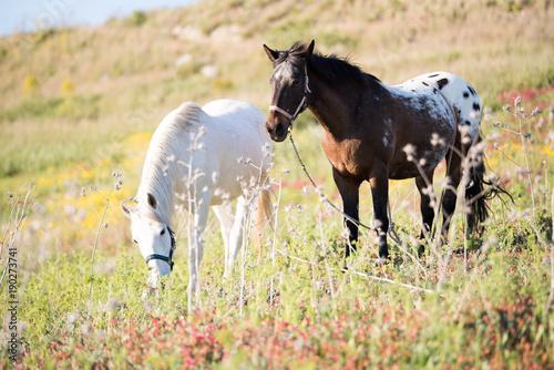 Cavalli nel sole