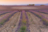 The purple infinity lavender field with straight lines at the sunset in Provence in France - 190274785