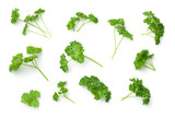 Leaves of Parsley Isolated on White Background - 190277372